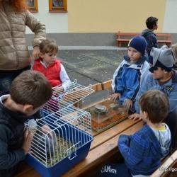 Állatok világnapja_17